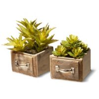 National Tree Company® 7-Inch Artificial Succulents with Square Ceramic Pots (Set of 2)