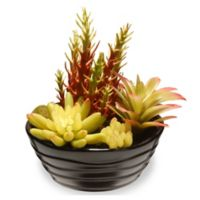 National Tree Company® 7.8-Inch Artificial Succulent with Black Ceramic Pot