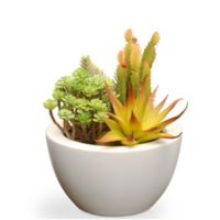National Tree Company® 7.5-Inch Artificial Succulent with White Ceramic Pot