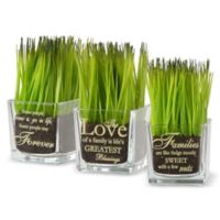 National Tree Company 6.75-Inch Artificial Sprout-Filled Glass Assortment in Green (Set of 3)