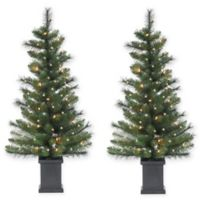 3.5-Foot Pre-Lit Potted Sycamore Spruce Artificial Christmas Tree (Set of 2)