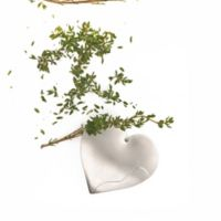 RSVP Endurance Stainless Steel Herb Stripper