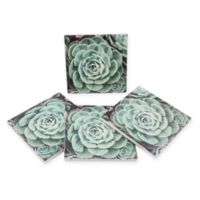 Thirstystone® Dolomite Love the Journey Square Coasters (Set of 4)