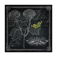 Trademark Fine Art 35-Inch x 35-Inch Chalkboard Botanical I Canvas Wall Art