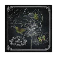 Trademark Fine Art 14-Inch x 14-Inch Chalkboard Botanical II Canvas Wall Art