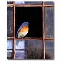 Courtside Market Bluebird Window 20-Inch x 24-Inch Canvas Wall Art