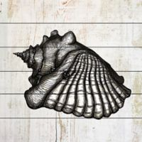 Marmont Hill Queen Conch 24-Inch Squared White Wood Wall Art