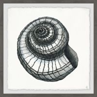 Marmont Hill Spiral Shell II 12-Inch Squared Framed Wall Art