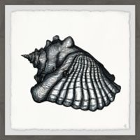Marmont Hill Queen Conch II 18-Inch Squared Framed Wall Art