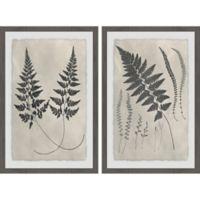 Marmont Hill 2-Piece Vintage Fern Study 24-Inch x 18-Inch Framed Wall Art Set