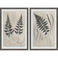 Marmont Hill 2-Piece Vintage Fern Study 32-Inch x 24-Inch Framed Wall Art Set
