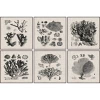 Marmont Hill 6-Piece Coral Specimen II 54-Inch x 36-Inch Floater Framed Canvas Wall Art Set