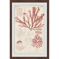 Marmont Hill Antique Coral Seaweed VI 24-Inch x 36-Inch Framed Wall Art