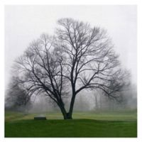 Masterpiece Art Gallery Mary Campagna Tree Solo 24-Inch x 24-Inch Canvas Wall Art