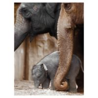 Family Moment 24-Inch x 18-Inch Canvas Wall Art