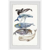 Marmont Hill Whale Species 12-Inch x 18-Inch Framed Wall Art