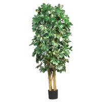 Nearly Natural 5-Foot Artificial Schefflera Tree