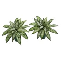 Nearly Natural 8-Inch Silver Queen Artificial Plant in Green Planter (Set of 2)