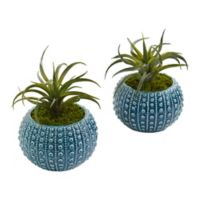 Nearly Natural 8-Inch Air Plant Artificial Succulent in Blue Vase (Set of 2)