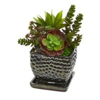 Nearly Natural 10-Inch Artificial Succulent Garden with Black Planter
