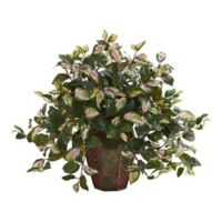 Nearly Natural 20-Inch Artificial Hoya Plant in Decorative Planter