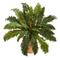 Nearly Natural 27-Inch Marginatum Artificial Plant in Terra Cotta Planter