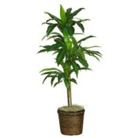 Nearly Natural 4-Foot Artificial Dracaena Plant in Wicker Basket