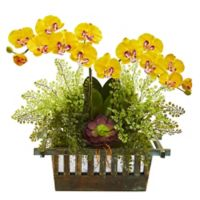 Nearly Natural 23-Inch Artificial Yellow Orchid, Succulent and Maiden Hair in Planter