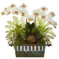 Nearly Natural 23-Inch Artificial Cream Orchid, Succulent and Maiden Hair in Planter