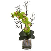 Nearly Natural 24-Inch Artificial Green Phalaenopsis Orchid in Vase
