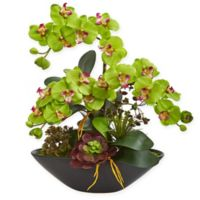 Nearly Natural 21-Inch Artificial Green Phalaenopsis Orchid and Succulent Garden