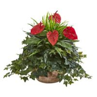 Nearly Natural 24-Inch Artificial Anthurium Mixed Greens Plant in Terracotta Planter