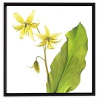 Dog Tooth Lily 10-Inch Square Canvas Wall Art in Green