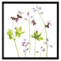Judy Stalus 10-Inch Square Wild Geranium Canvas Wall Art