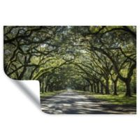 Oak Trees with Spanish Moss in Savanna Georgia 12-Inch x 18-Inch Wall Decal in Green