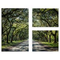 Cody York 24-Inch x 36-Inch 3-Piece Georgia Oak Trees Canvas Wall Art