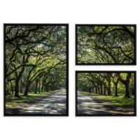 Cody York 24-Inch x 36-Inch 3-Piece Georgia Oak Trees Floater Canvas Wall Art