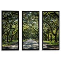 Cody York 24-Inch x 36-Inch 3-Piece Georgia Oak Trees Symmetrical Canvas Wall Art