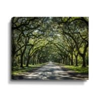 ArtWall Oak Trees in Spanish Moss of Georgia 8-Inch x 12-Inch Gallery Wrapped Canvas Art
