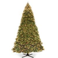 National Tree Company® 16-Foot Douglas Fir Christmas Tree with Dual Color Lights