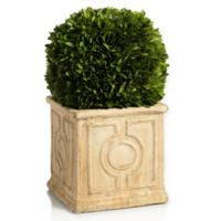 Zodax Cinzia 14-Inch Preserved Boxwood Topiary in Green