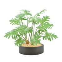 Green Philodendron Plant with Black Pot