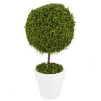 Northlight 15-Inch Artificial Green Moss Ball Potted Spring Topiary Tree
