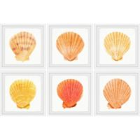 Marmont Hill Sea Shells Wonder II 36-Inch x 24-Inch Framed Hexaptych Wall Art