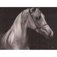 ArtMaison Canada Horse Profile I 30-Inch x 40-Inch Canvas Wall Art