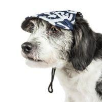 Large Bone Cappa Graffiti Sculptured Dog Cap in Navy