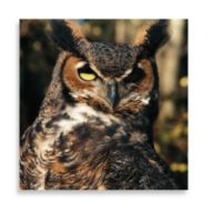 Brown Owl 16-Inch x 16-Inch Printed Canvas