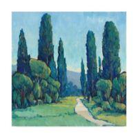 Trademark Fine Art Cypress Path II 14-Inch Square Canvas Wall Art