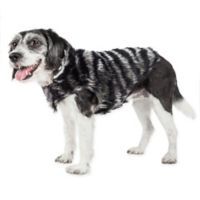 Small Luxe Chauffury Zebra Mink Fur Dog Coat in Black