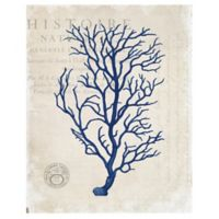 Masterpiece Art Gallery Navy Blue Coral 11-Inch x 14-Inch Canvas Wall Art